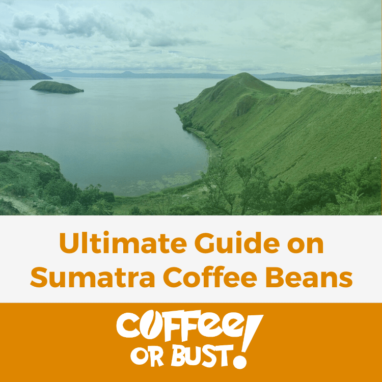 Ultimate Guide on Sumatra Coffee Beans